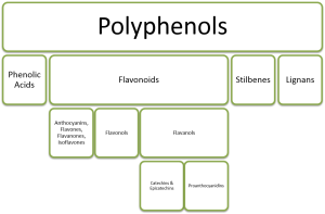 polyphenols (condensed phytochemical tree) - without figure subtitle