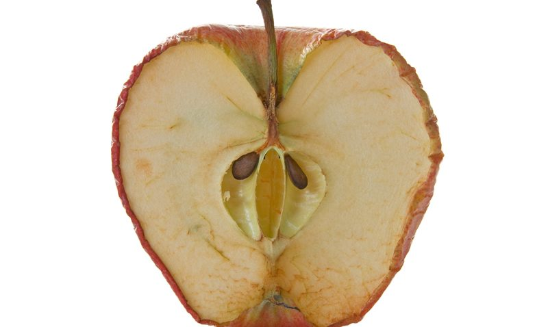 Inside of an old apple on white background