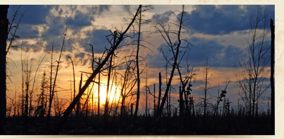 Burned tree skeletons at sunset.
